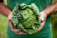 10 công dụng của bắp cải đối với sức khỏe