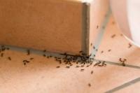 3 loại thuốc diệt kiến vừa an toàn mà hiệu quả khiến nhà bạn không còn bóng quân
