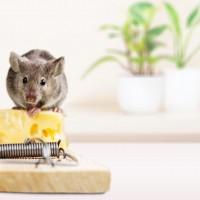 4 loại thuốc diệt chuột phổ biến 2020