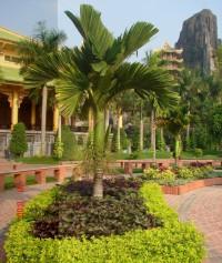 Cây xanh cảnh trồng ngoại thất