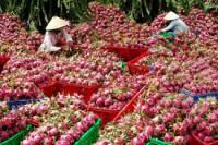 """Cửa hàng phân phối nông sản việt nam: nông nghiệp """"đặt hàng"""" các tham tán thương"""