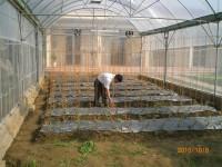 Cung cấp lưới chắn côn trùng trồng rau sạch
