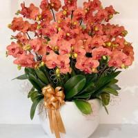 Hoa lan hồ điệp - món quà sang trọng