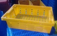 Két đựng cá - kết đựng cá - khay đựng cá - sọt nhựa đựng cá cơm giá rẻ