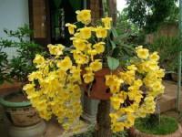 Mách bạn cách chăm sóc hoa lan rừng hiệu quả cho hoa đẹp