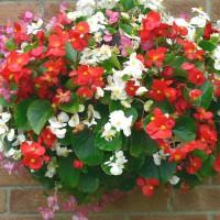 Top 20 hoa đẹp dễ trồng tại việt nam