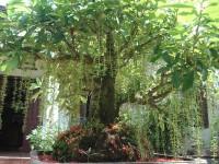 Top 3 công ty cung cấp cây trong nhà chất lượng nhất tp. hcm