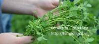 Tổng hợp các loại giống cỏ trong chăn nuôi